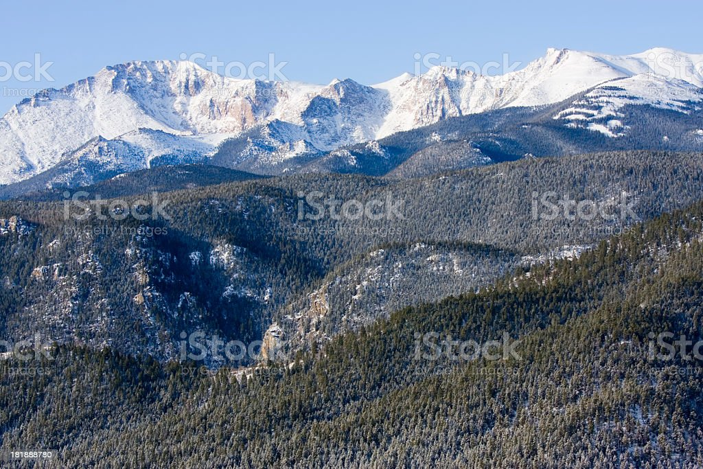 Herd of Mule Deer in Colorado Winter Snow royalty-free stock photo