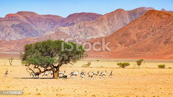 Herd of oryx standing near a fountain under a tree in Namib desert panorama with large mountains in the background.