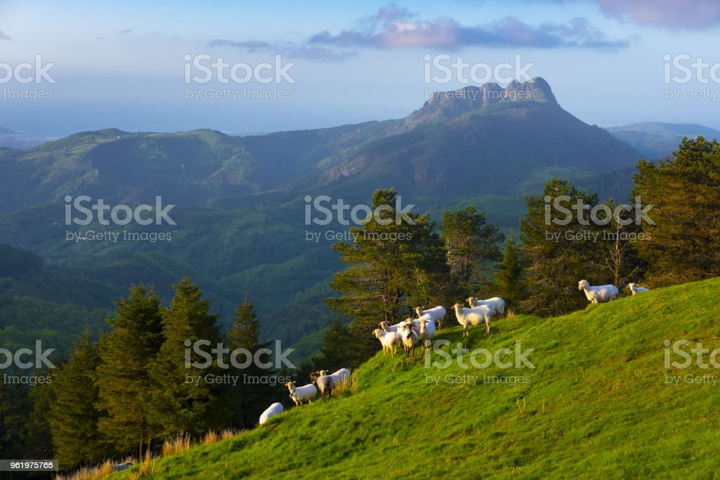 Troupeau de moutons dans les montagnes - parc naturel d'Aiako Harriak, pays Basque - Photo