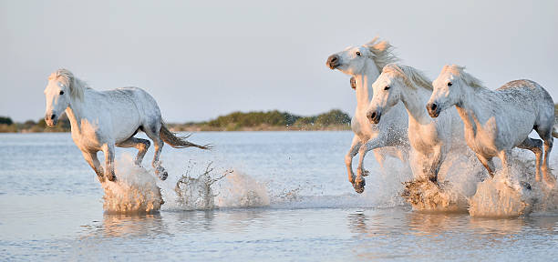 Royalty Free Wild Horses Pictures, Images and Stock Photos ... - photo#28