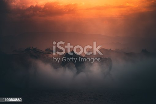 Beautiful herd of wild yilki horses running gallop and kicking up dust against mountain background and dramatic sunset sky on sunny summer day in Kayseri, Turkey.