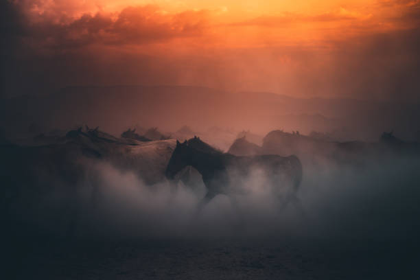 Herd of wild horses running gallop in dust at sunset time Beautiful herd of wild yilki horses running gallop and kicking up dust against mountain background and dramatic sunset sky on sunny summer day in Kayseri, Turkey. atmospheric mood stock pictures, royalty-free photos & images