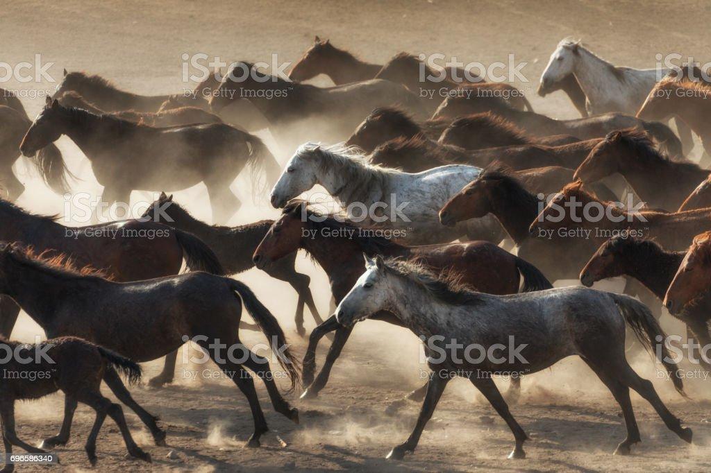Herd Of Wild Horses Running In Dust Stock Photo Download Image Now Istock