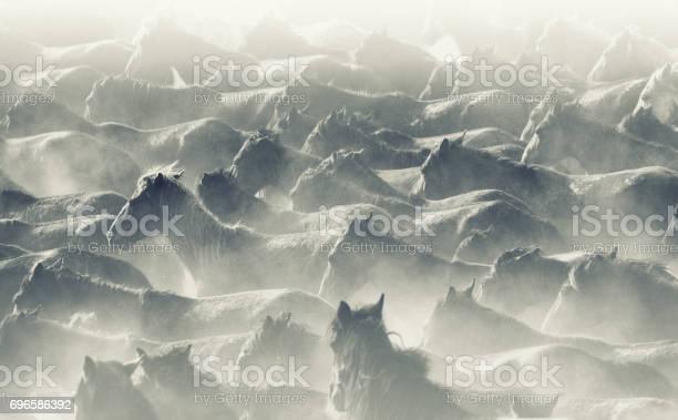 Herd of wild horses running in dust picture id696586392?b=1&k=6&m=696586392&s=612x612&h=9adbsst8pmk1mom9lraosi8sr ftu3mwjcd dpgzinc=