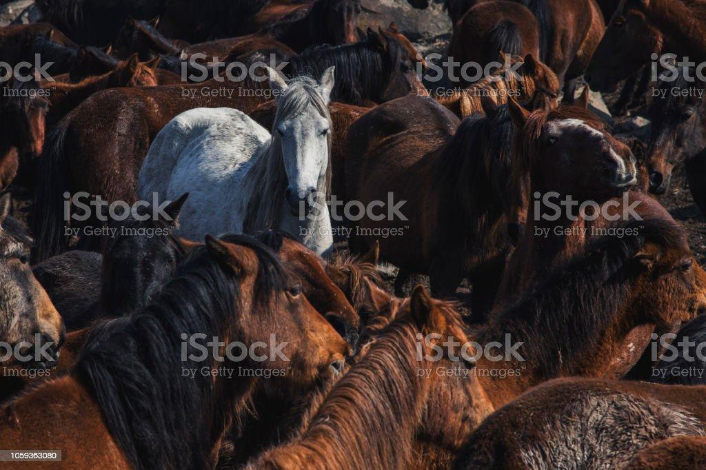 Herde von Wildpferden im Sumpf – Foto