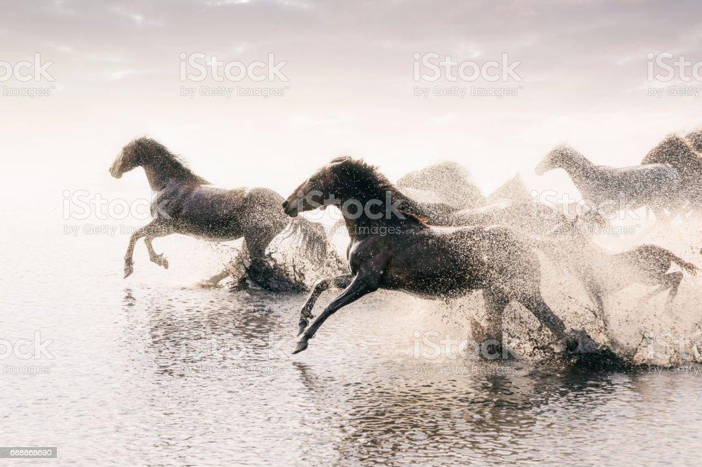 Herd Of Wild Horses Running In Water Stock Photo Download Image Now Istock