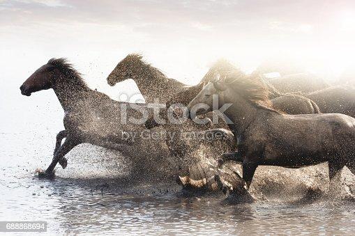 Wild horses of Central Anatolia, Turkey