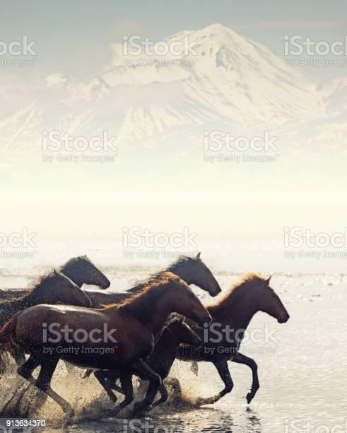 Herd of wild horses running in water picture id913634370?b=1&k=6&m=913634370&s=612x612&h=xkcyjmfle1ovcsivdjqvv4yynshrdclywlgpkpnt1sa=