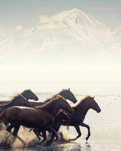 Herd of Wild Horses Running in Water stock photo