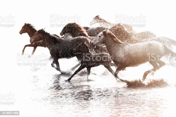 Herd of wild horses running in water picture id913637468?b=1&k=6&m=913637468&s=612x612&h=ebyhicgu0fn4pkmztvbweu5rojucxnw7swtpl fnbco=