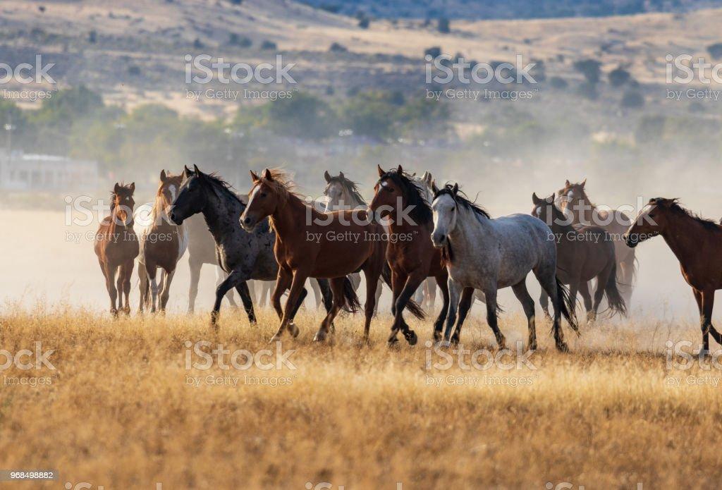 Herd Of Wild Horses Running Stock Photo Download Image Now Istock
