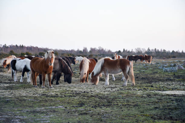Herd with beautiful horses stock photo