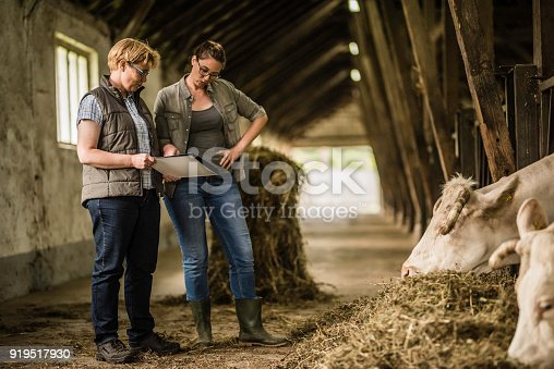 istock Herders discussing in shed 919517930