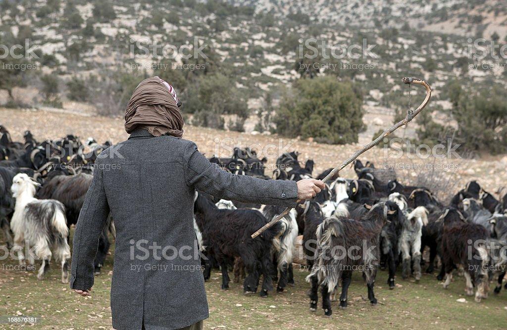 Herdsman royalty-free stock photo
