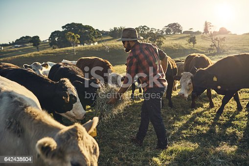 Shot of a young farmer tending to his herd of livestock in the field
