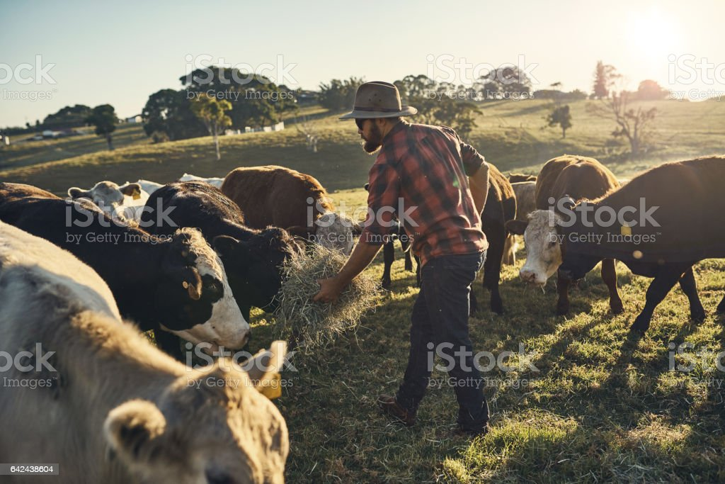 Here, boy stock photo