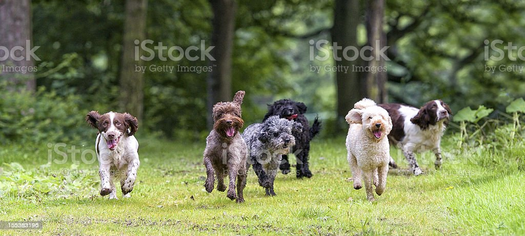 here come the girls... stock photo
