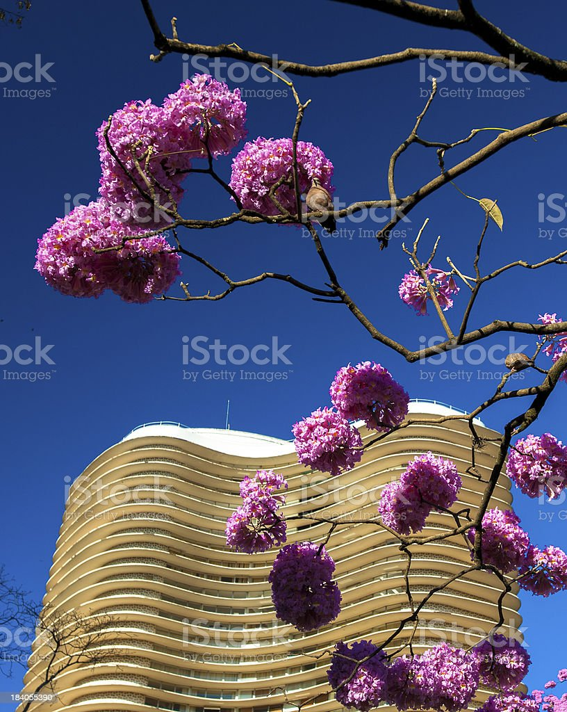 Here comes the spring stock photo