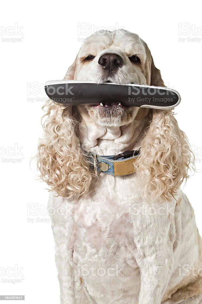Here Is Your Remote Control royalty-free stock photo