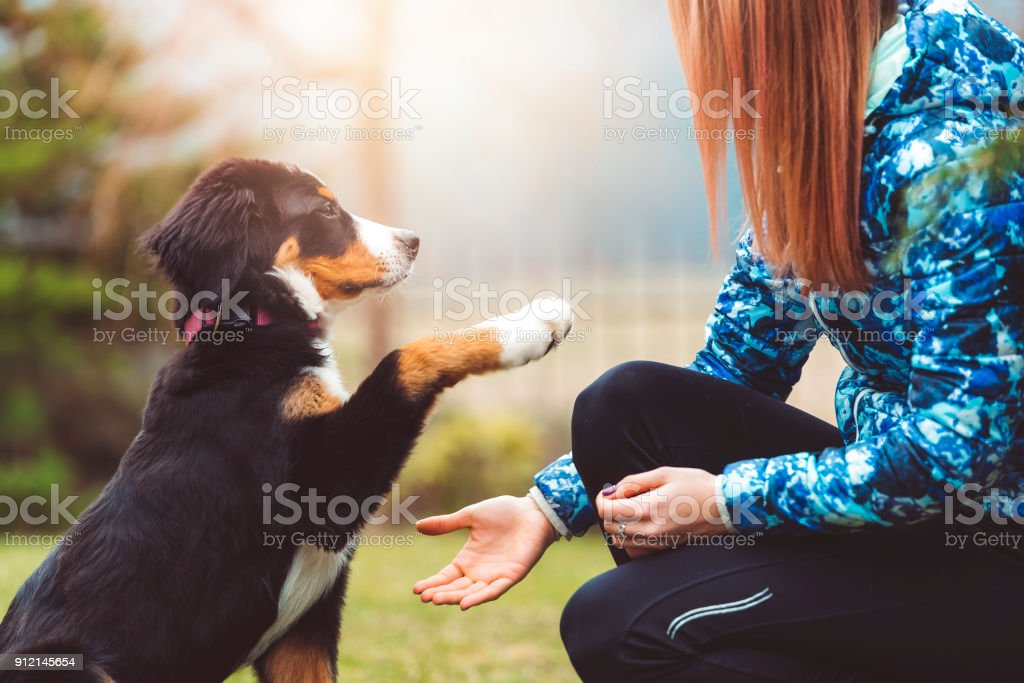 Here you go human, you can have my paw stock photo
