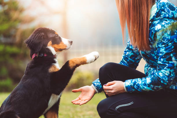 Here you go human, you can have my paw A beautiful young women on a walk with her dog. It's play time, if you'll be a good boy you'll get a treat. A dog is the only thing on earth that loves you more than he loves himself. domestic animals stock pictures, royalty-free photos & images