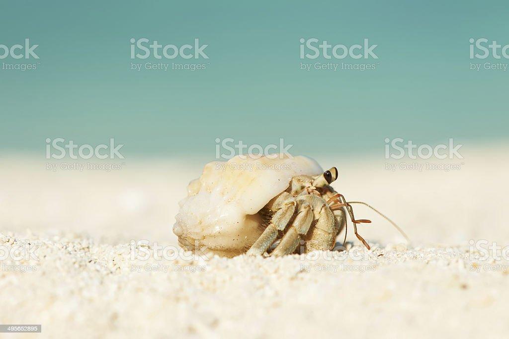 Hermit crab at beach royalty-free stock photo