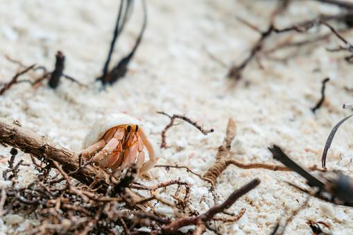 Hermit crab in sand.