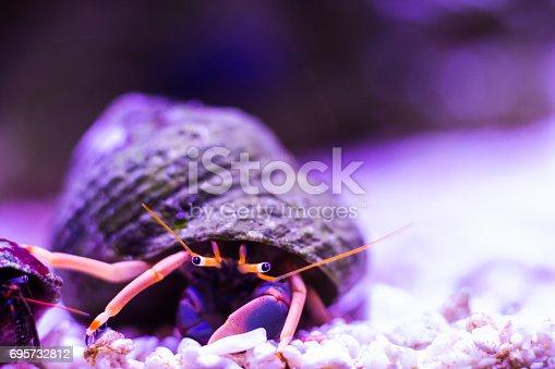 Hermit crab in the aquarium close-up in white sand