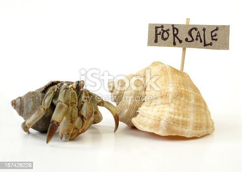 A Hermit Crab inspects a new shell with a
