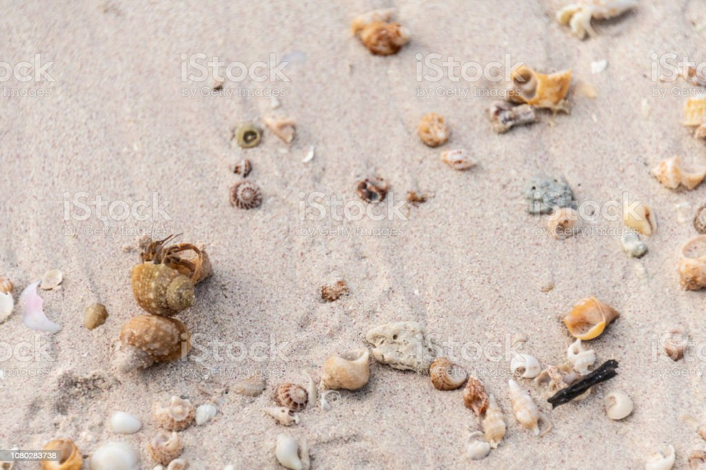 Hermit crab on a sandy Caribbean beach among shells stock photo