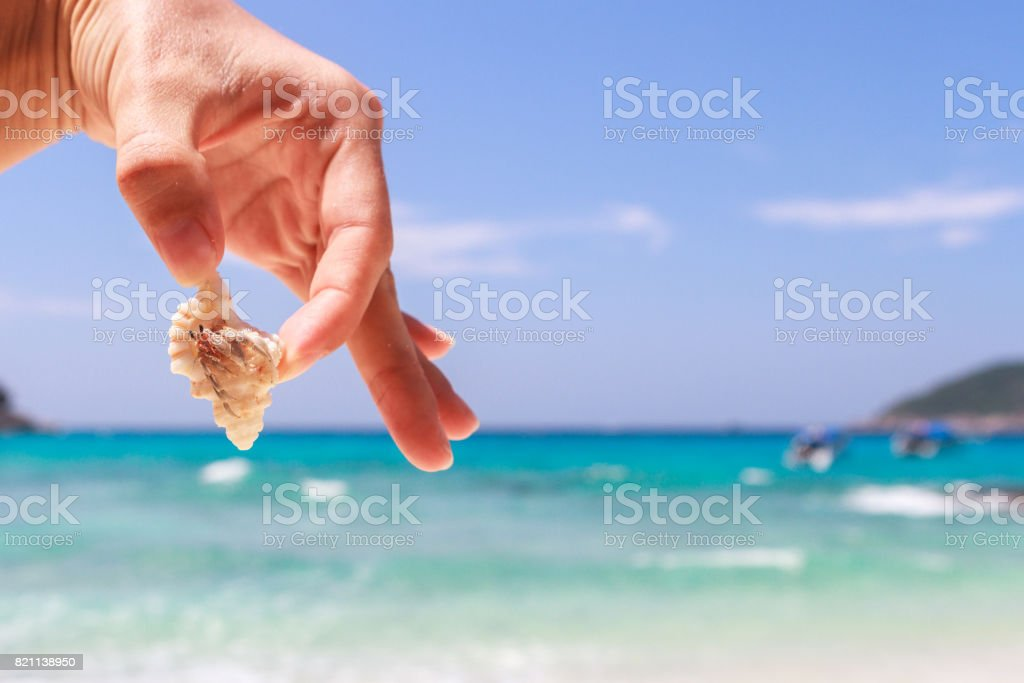 hermit crab on hand at Lipe island thailand stock photo
