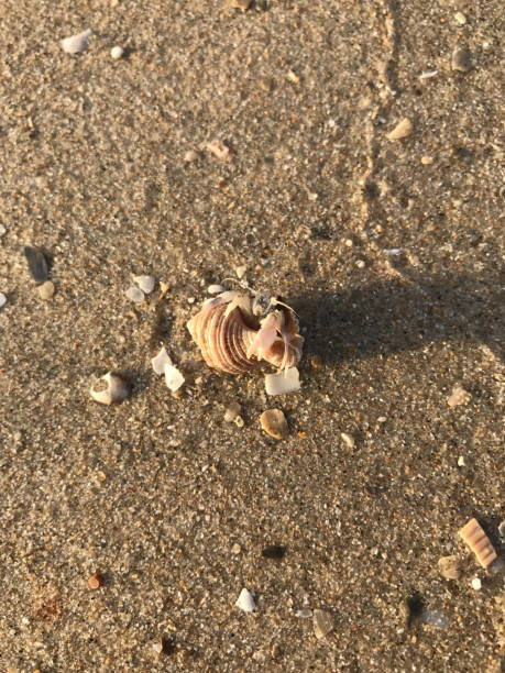 Hermit crab on the beach. Hermit crab on the beach. aegis stock pictures, royalty-free photos & images