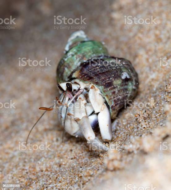 Pustelnik Krab Na Plaży - zdjęcia stockowe i więcej obrazów Bezkręgowce