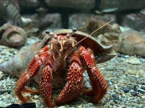 Close Up View Of Hermit Crab Under Water