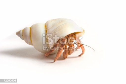 Hermit crab walking. Isolated on a white background.Other shots in this series: