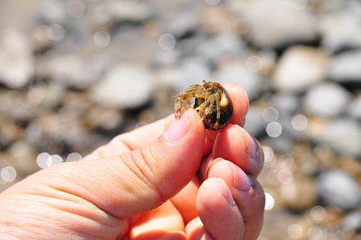 A hermit crab caught by the beach