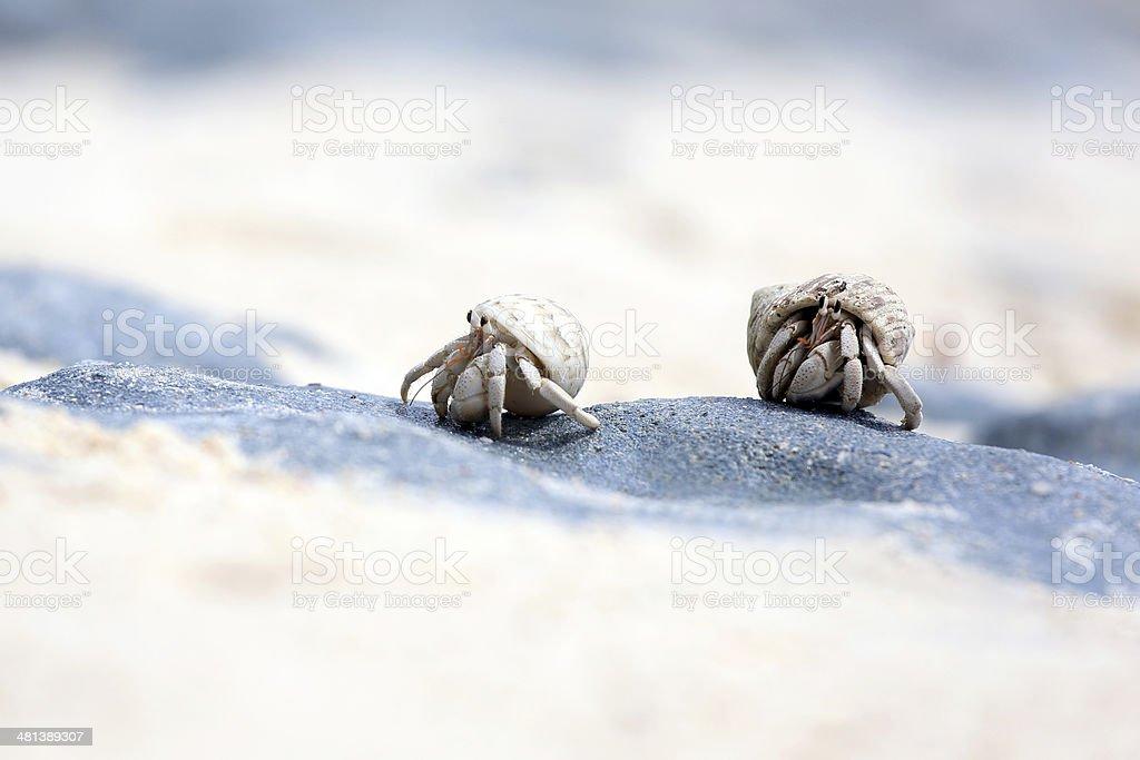 Hermit crabs stock photo
