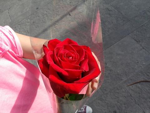 Hermosa Rosa De Pétalos Rojos Nl Mano Stockfoto en meer beelden van Bloem - Plant