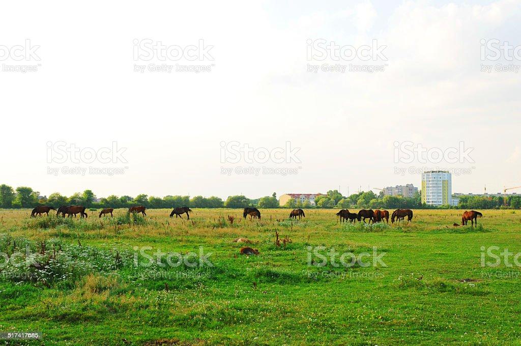 Hern in meadow stock photo