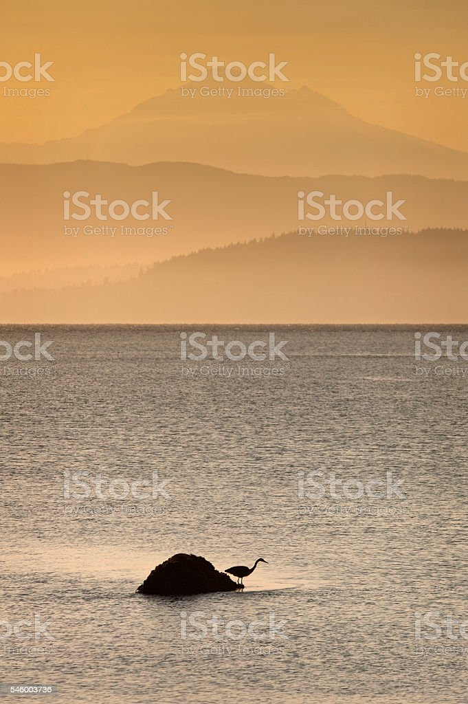 Heron and Mt. Baker stock photo