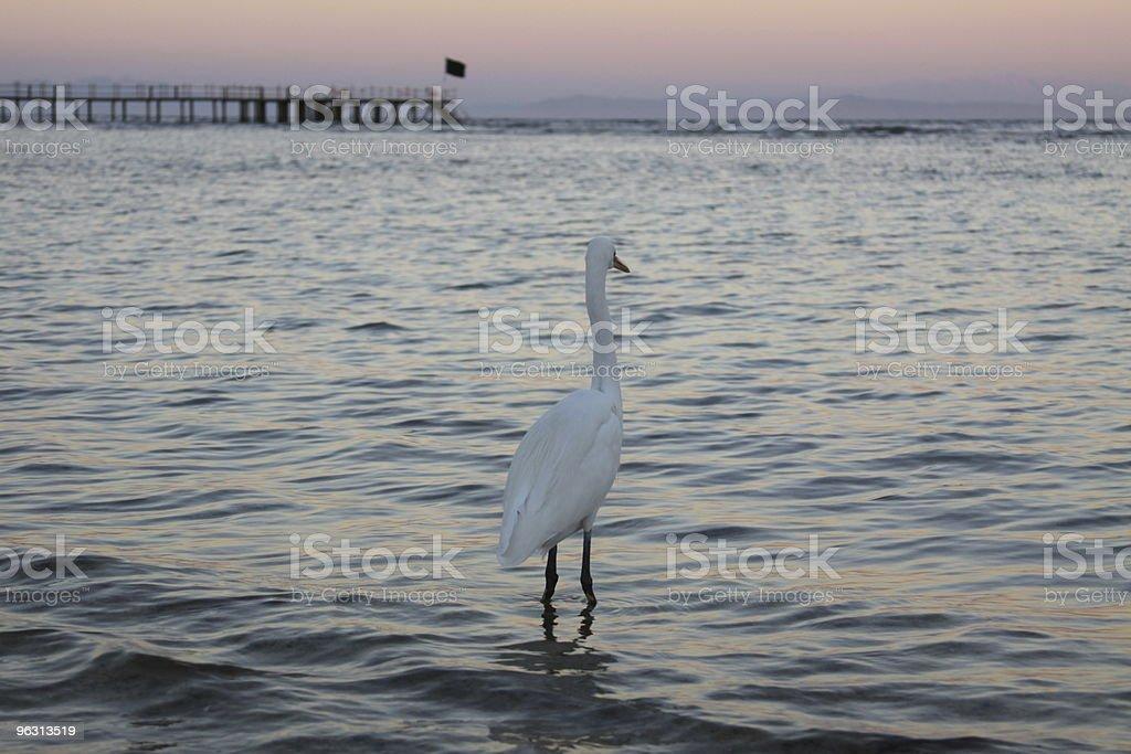 Heron Ashore - Royaltyfri Bildbakgrund Bildbanksbilder
