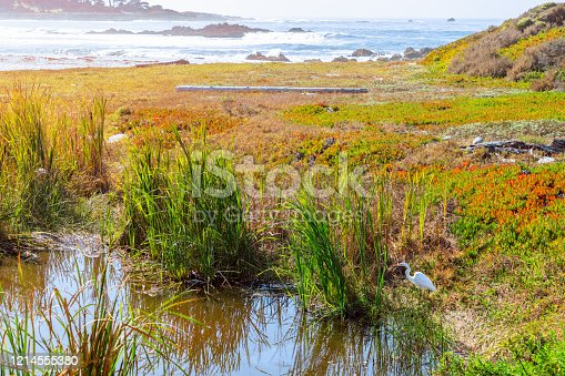 Heron at the pond on Seal Rock Beach (Bright colours) Greek Beach, 17 Mile Drive, San Francisco, California, USA