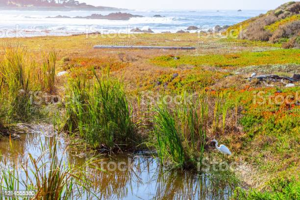 Photo of Heron at the pond on Seal Rock Beach (Bright colours) Greek Beach, 17 Mile Drive, San Francisco, California, USA