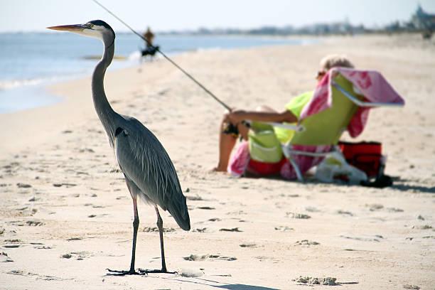 garça pássaro está à espera que o fishman para apanhar peixes - fishman imagens e fotografias de stock
