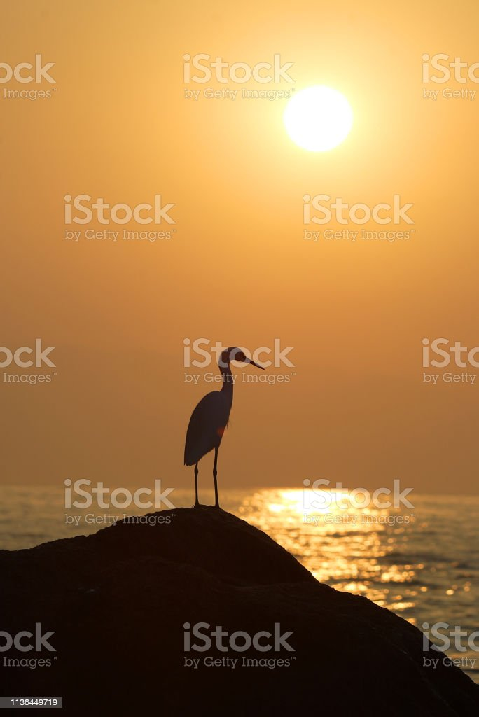 Heron bird watching sunset over sea stock photo