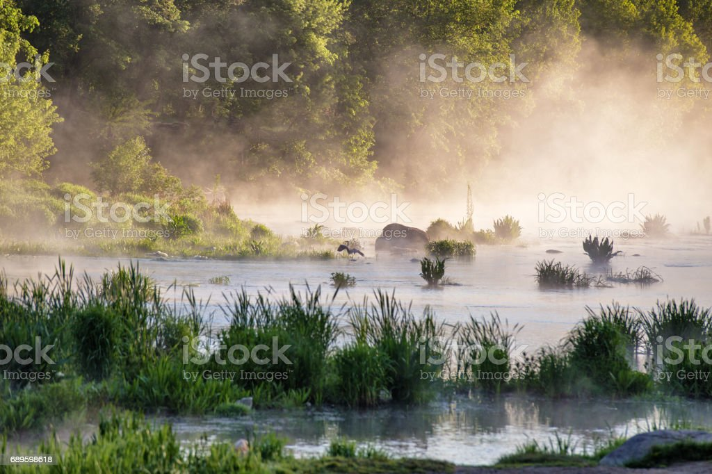 Heron on misty morning on the river. stock photo