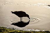 heron on the beach, beautiful photo digital picture