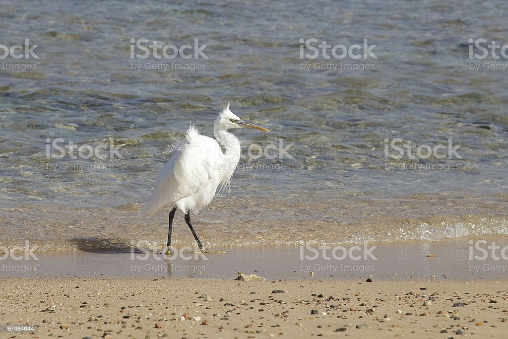 heron royalty-free stock photo
