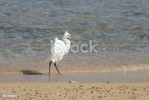 Heron Stock Photo & More Pictures of Animal