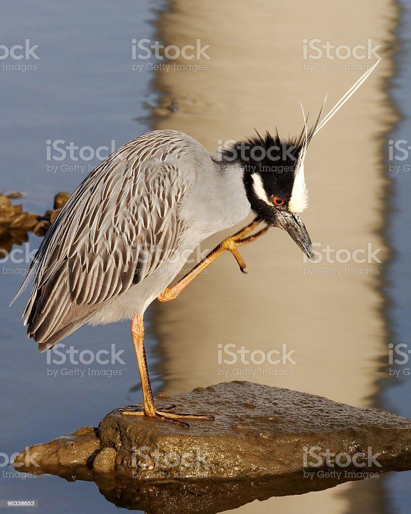Heron Scratch royalty-free stock photo